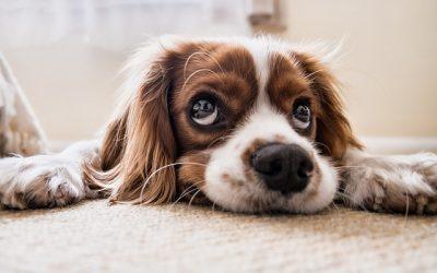 10 infos à mettre sur la médaille de votre chien