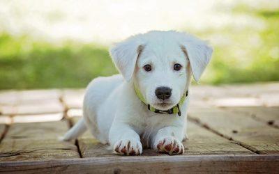 Comment éviter de perdre son chien ?